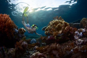 Underwater shot of the young lady snorkeling over vivid coral reef in tropical sea. Bali Barat National Park, Indonesia