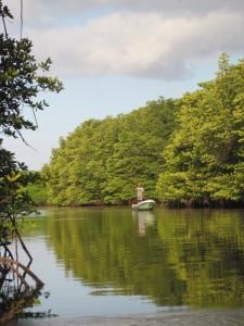 Mangroves Nusa Lembongan