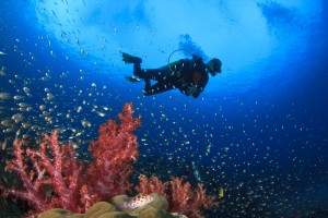 bigstock-Scuba-diving-on-coral-reef-und-97891529-min
