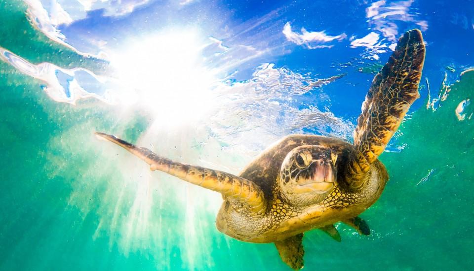 10 Lembongan Marine Life Favourites